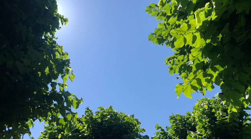 Blau und grün... Nochmals einen Blick in den Tessiner Himmel...