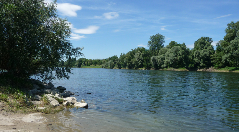 Der Rhein bei Hartheim