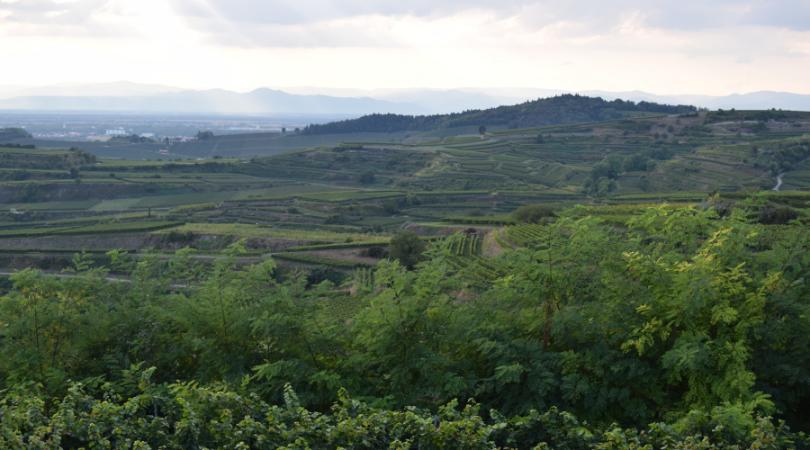 Weinbaugebiet und erloschener Vulkan Kaiserstuhl mit Blick ins Elsaß und den Vogesen