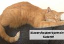 Blasorchesterrepertoire: Katzen!